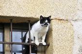 Gato en la ventana — Foto de Stock