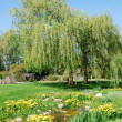 Weeping willow — Stock Photo #6381287