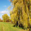 Weeping Willow — Stock Photo #6384799