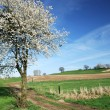 Flowering tree — Stockfoto