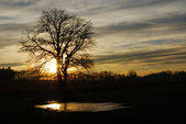 Tree in the sunset — Stock Photo
