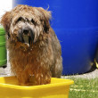 Dog having a bath — Stock Photo