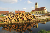 Timber logs — Stock Photo