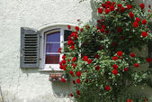 Window and roses — Stock Photo