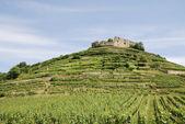 Château sur un vignoble — Photo