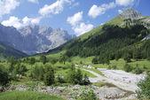 Verão nos alpes — Foto Stock