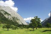 Alp akçaağaç — Stok fotoğraf