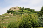 Castle on a vineyard — Stock Photo