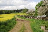 Countryside — Foto de Stock