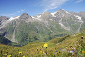 Flower meadow in the alps — Stock Photo