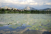 Lake with water lilies — Stock Photo
