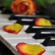 Rose on Piano — Stockfoto
