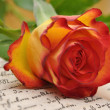 Stock Photo: Rose on Diary