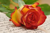 Rose on a Diary — Stock Photo