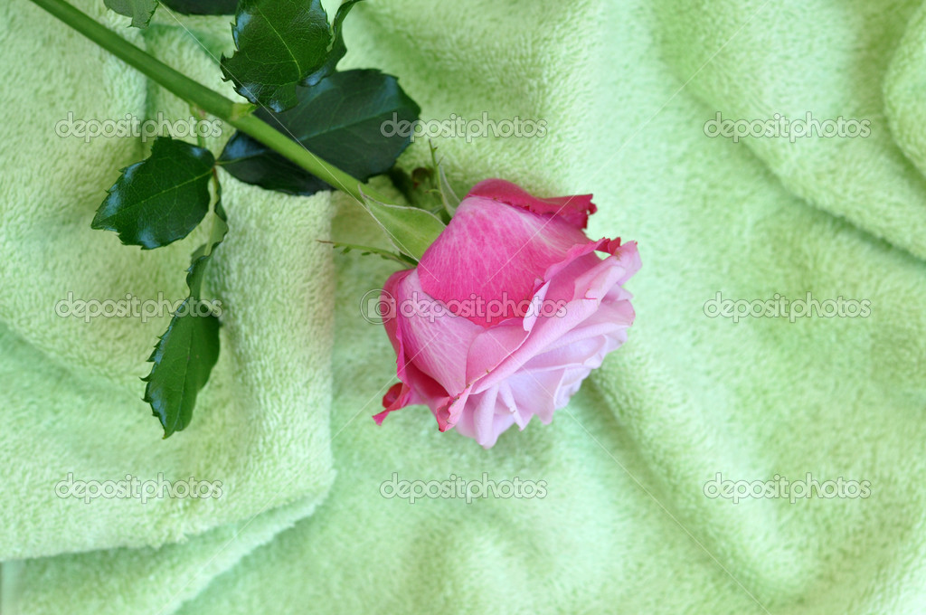 Delicate pink rose on a soft green towel — Stock Photo #6399906