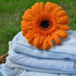 Wet Flower on Blue Baby Clothes — Stock Photo