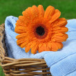 Wet Flower on Soft Towels — Stock Photo