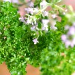 Fresh Herbs — Stock Photo
