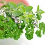 Fresh Herbs — Stock Photo #6408186