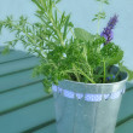Fresh Herbs — Stock Photo #6408269