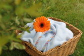 Wet Flower on Blue Baby Blanket — Stock Photo