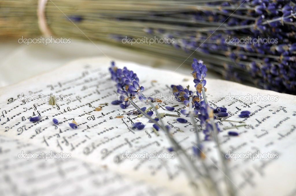 Dry lavender on an old book closeup — Stock Photo #6423717