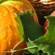 Pumpkins and Vine Leaves — Stock Photo