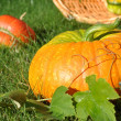 Stock Photo: Pumpkins and Wicker Basket