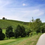 путь рядом виноградники — Стоковое фото