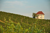 House in Vineyards. Škalce, Slovenia — Stock Photo