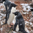 Pinguine — Stockfoto #6393724