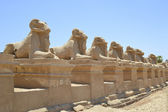 Avenue of sphinxes at Karnak Temple — Stock Photo