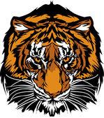 Tiger Head Graphic Mascot — Stock Vector