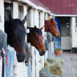 Horses in stables — Stock Photo #6396290