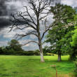 Dead tree under a moody sky — Stock Photo