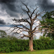 Dead tree under moody sky — Stock Photo #6396507
