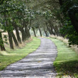 Tree lined drive — Stock Photo
