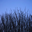 Stock Photo: Tree branches against a wintry sky