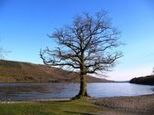Tree at the edge of a lake — Stock Photo