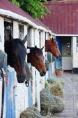 Horses in stables — Stock Photo
