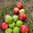 Apples on the grass mowed — ストック写真