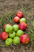Apples on the grass mowed — Stock Photo