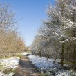 Foto Stock: Footpath through snow covered trees