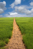 Footpath to the Horizon — Stock Photo