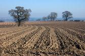 Rural English winter landscape — Stock Photo