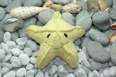 A Smiling Starfish — Stock Photo