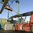 Port, worker and forklifts — Stock Photo