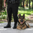 Police Dog 2 — Stock Photo #6517301