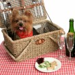 Picnic Puppies - Stock Photo