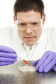 Scientist Grows Culture in Petri Dish — Stock Photo